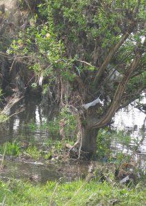 Billendoekjes in Meers - Litter free rivers and streams (LIVES)