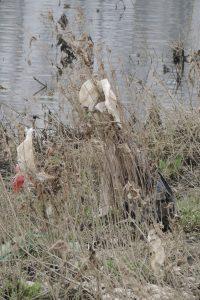 Billendoekjes in de struiken - Litter free rivers and streams (LIVES)